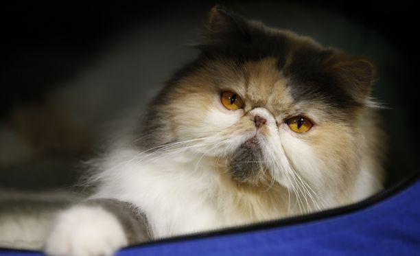 Kissat häiritsevät erityisesti Uuden-Seelannin lintulajeja.