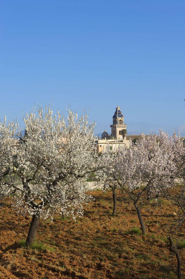 Mantelipuut kukkivat keväisin Santa Maria del Camissa.