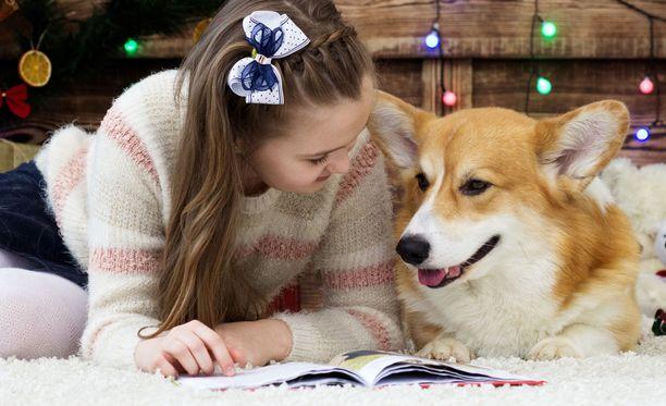 Corgin kookkaisiin korviin mahtuu paljon lukemista. Kaiken rotuiset koirat ovat kuitenkin päteviä luku- ja kaverikoiria. Ehtona on vain ihmisiä rakastava luonne. Kuvituskuva.