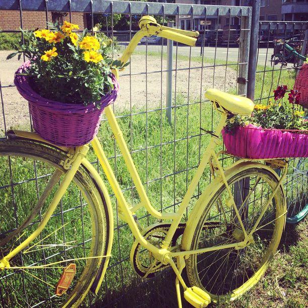 Aiempina vuosina kukkia on isutettu esimerkiksi polkupyörään.