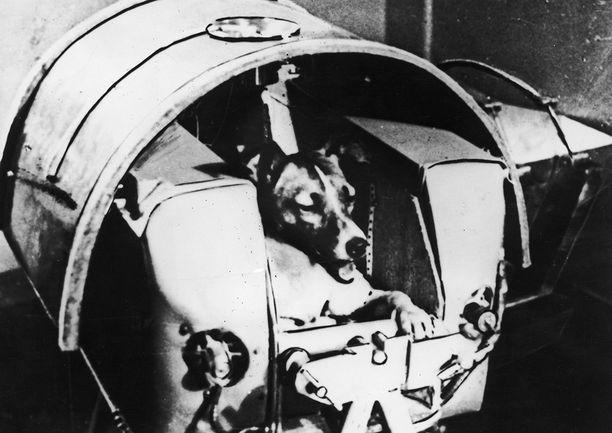 Tässä kapselissa Laika lähetettiin avaruuteen. Koiran päällä oli täynnä antureita oleva puku, joka on entisestään voinut lisätä sen läkähtymistä.