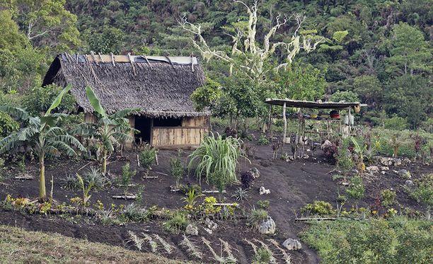 Syyskuun lopun jälkeen Papu-Uuden-Guineassa Engan provinssissa on tehty seitsemän hyökkäystä noituudesta epäiltyjä naisia kohtaan. Hyökkäyksistä kuusi on aiheuttanut uhrin kuoleman. Kuvituskuva Papua-uudesta-Guineasta.