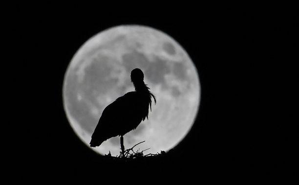 Kuussa pystytään ehkä jatkossa tuottamaan happea.