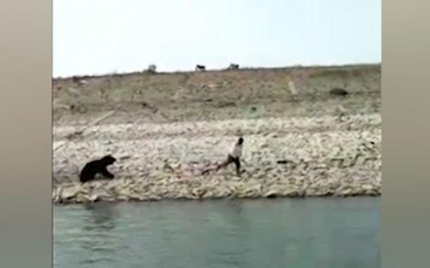 Karhu ajoi takaa pelastajaansa.