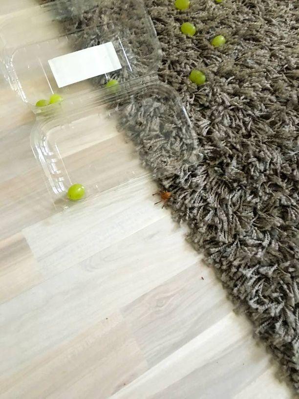 Tunkeilija sinkoutui nopeasti lattialle viinirypälerasian mukana.