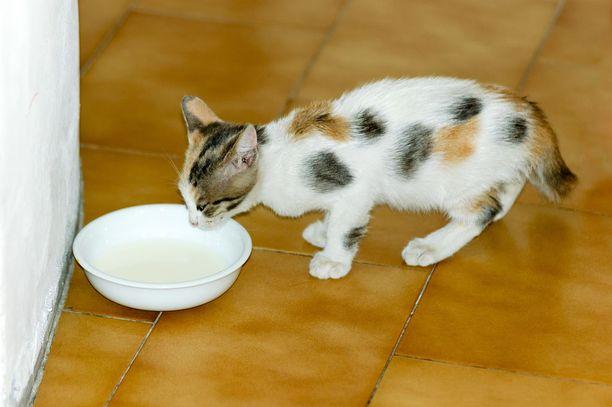 Myös lemmikkikodeissa on tullut vastaan monenlaisia yllätyksiä. Eräälle lukijalle tarjottiin kakkua kissan lautaselta. Kuvituskuva.
