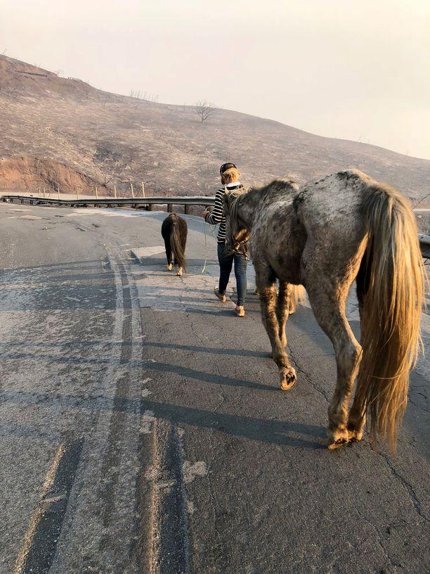 Miniponit ja arabianhevonen talutettiin turvaan vuorilta. Matka oli noin seitsemän kilometriä.