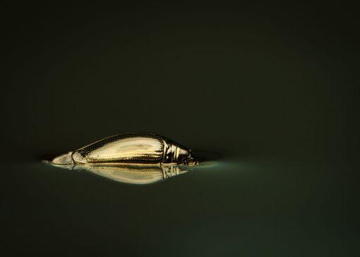Hohtava hopeaseppä on veden pinnalla kiitävä peto, jonka erikoisuus ovat kaksiosaiset silmät: toinen verkkosilmäpari katsoo veden yläpuolelle, toinen alapuolelle.