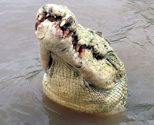 Krokotiilihyökkäykset eivät ole harvinaisia Meksikossa.
