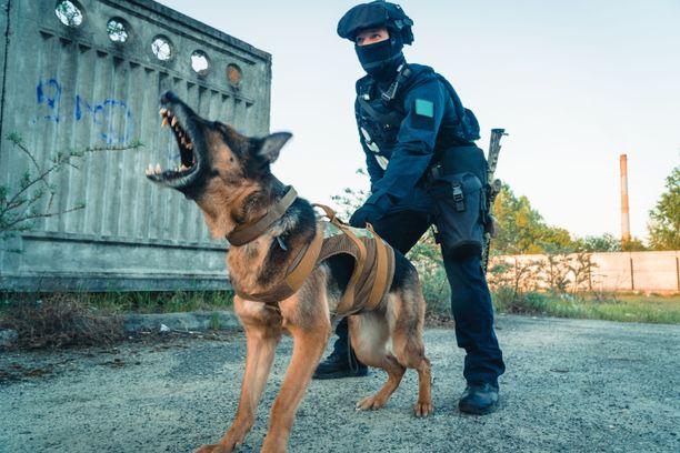 Koiria hoitaneen sotilaan kuolema havaittiin vasta tunteja myöhemmin. Arkistokuva.