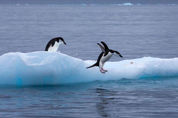 Etelämanner on maapallon kylmin alue.