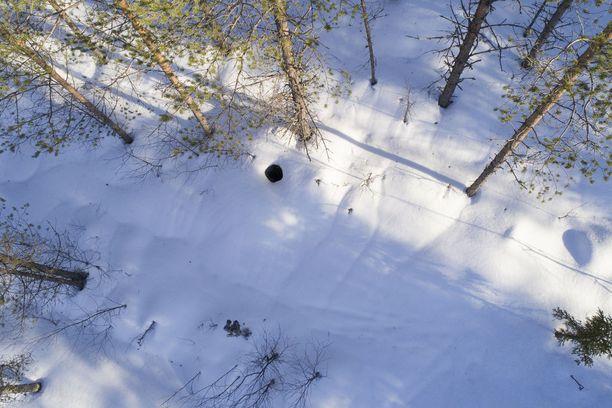 Ilmakuvasta on havaittavissa pesäkolo - ja puu, johon kamerat on kiinnitetty.