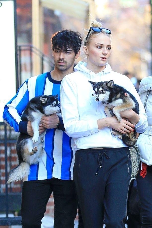 Joe Jonas ja Sophie Turner kahden koiransa kanssa.