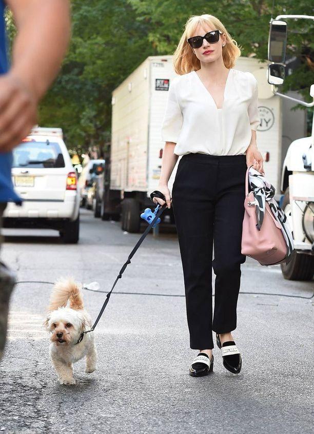 Näyttelijä Jessica Chastain kävelyllä silmäteränsä Chaplinin kanssa. Vaalea hurmuri menetti jalkansa onnettomuudessa, jonka jälkeen Chastain adoptoi koiran itselleen.