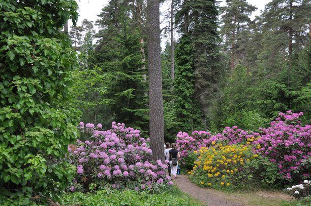 Kouvolasta löytyy Suomen vanhin puulajipuisto, Mustilan arboretum.