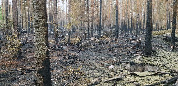 Pyhärannan maastopalossa on tuhoutunut kymmeniä hehtaareja metsää.