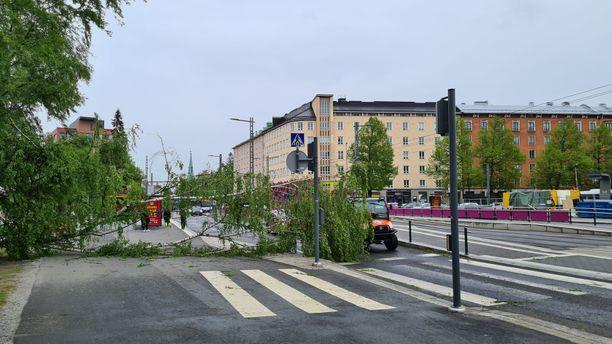 Tuuli kaatoi koivun Tampereella Pyynikintorin läheisyydessä.