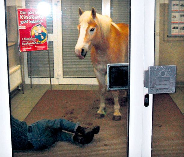 HALPA HOTELLI Paikallinen poliisi kuvasi uupuneen Wolfgang Heinrichin ja tämän Sammy-ratsun wiesenburgilaisen pankin tuulikaapissa.