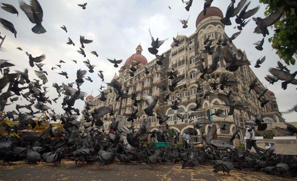 Lintujen joukkokuolemia on sattunut lyhyen ajan sisällä eri puolilla maailmaa. Kuva ei liity tapaukseen.