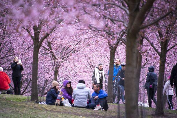 Keväinen kauneus on saanut ihmiset läjäytymään puistoihin.