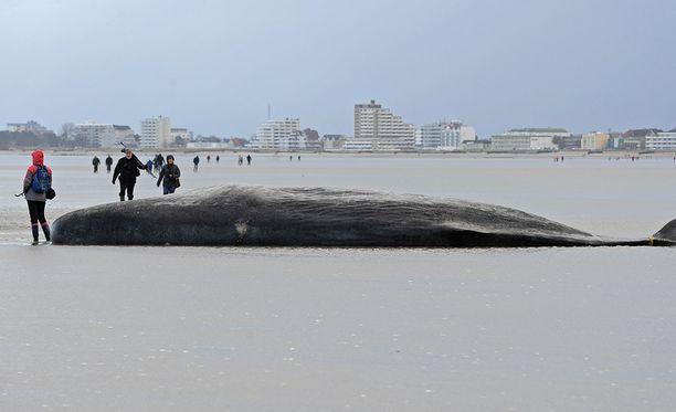 Valaita rantautui Hollannin, Saksan, Ranskan ja Britannian rannikoille.