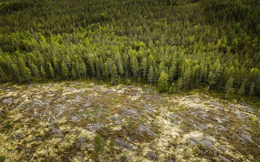 Pääkirjoitus: Puupelto ei korvaavanhaa arvometsää