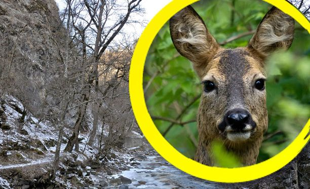 Vaarallinen tilanne päättyi onnellisesti Yhdysvalloissa Georgiassa, kun mies ampui vahingossa peuraksi luulemaansa naista.