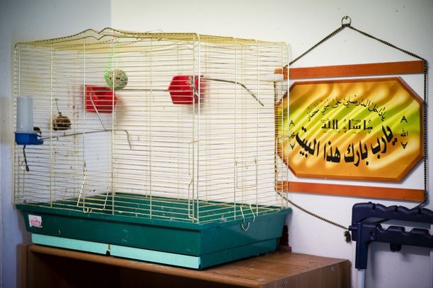 Valkoposkibulbulit ovat yleisesti käytettyjä häkkilintuja Lähi-idän alueella, etenkin Irakissa.