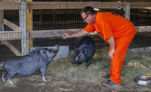 Tommie Piatt ruokkii hylättyjä sikoja.