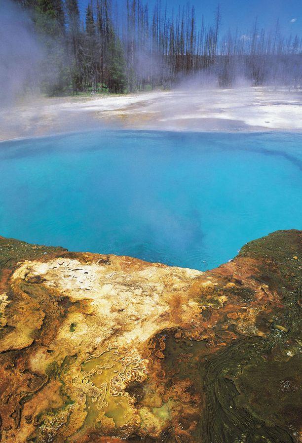 West Thumb -geysirin juurelle on muodostunut näin sininen lammikko Yellowstonen kansallispuistossa Yhdysvalloissa.
