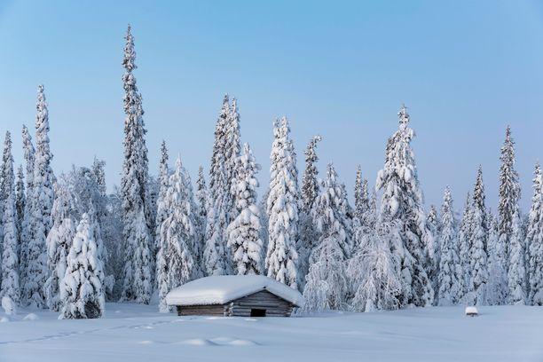 Pallas-Yllästunturin kansallispuisto. Kuvituskuva.