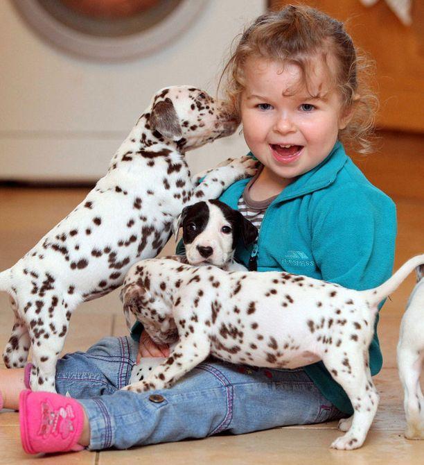 Dalmatiankoira tunnetaan lapsirakkaana rotuna.