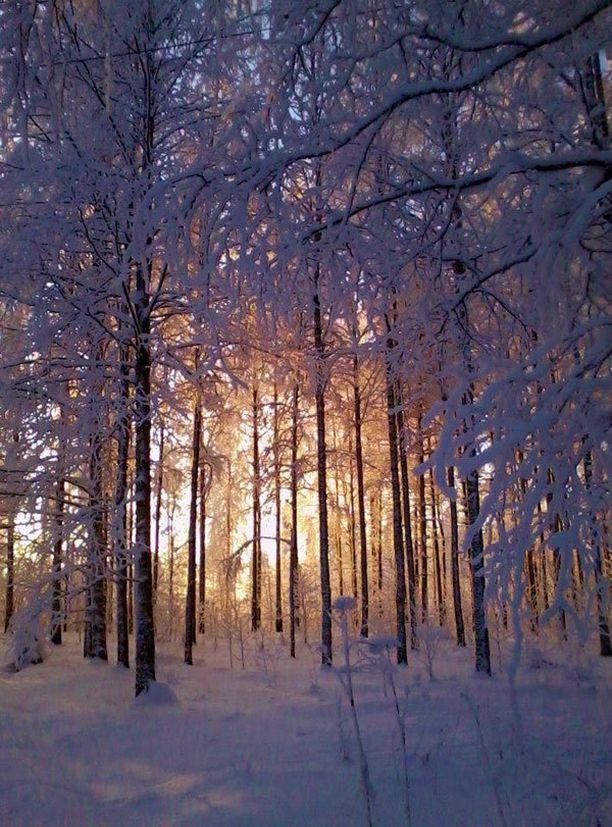 Talviaurinko loistaa puiden takaa.