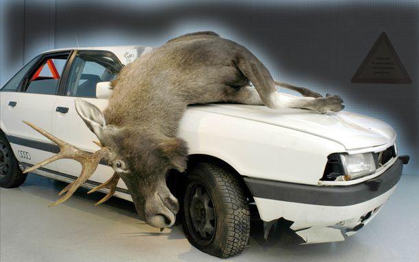 Hirvi on yllättävän iso eläin, kun se rysähtää konepellille. (KUVA Uudenmaan Ajoharjoitteluradat, Turvallisuustalo havaintovälineistö).