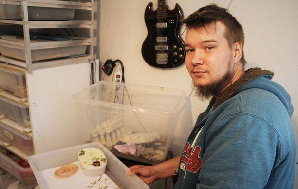 Sastamalalainen Aleksi Forss pitää vastasyntyneistä käärmevauvoista huolta. Käärmeistä toinen piilottelee vielä jäätelörasiassa.