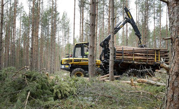 Ympäristövaliokunnan laskentatavan tulkinta menee niin, että jos tulevat hakkuumäärät ovat suuremmat suhteessa vertailujaksoon 2000-2012, ne luetaan päästöiksi.