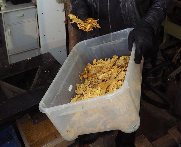 Antti Pellonpää leikkaa kotitilallaan kuivatut tupakat pussitettavaksi sätkä- tai piipputupakaksi, joita myydään erikoistupakkakaupoissa.