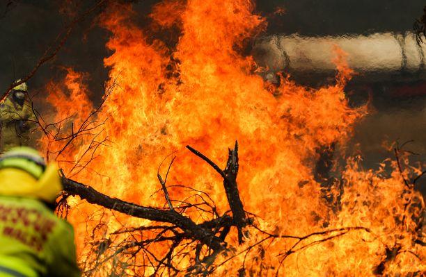 Kuva otettu tulipalosta Tareessa, Australian Uudessa Etelä-Walesissa 11. marraskuuta 2019.