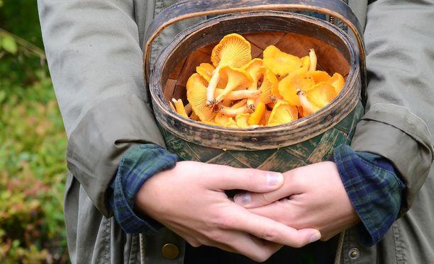 Sienestäminen on terveellistä ja niin on myös sienien syöminen.
