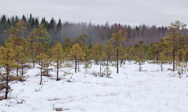 Kurjenrahkan soilla voi retkeillä talvisinkin.