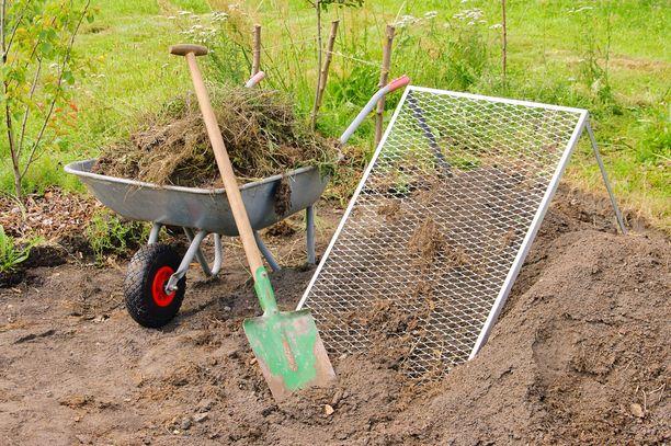 Jos vieraslajeja ryhtyy kaivamaan maasta, juuret on hävitettävä huolella eteenpäin. Kurtturuusun ja lupiinin juuria ei saa siirtää kompostiin, vaan juuret pitäisi polttaa tai laittaa sekajätteeseen. Kuvituskuva.