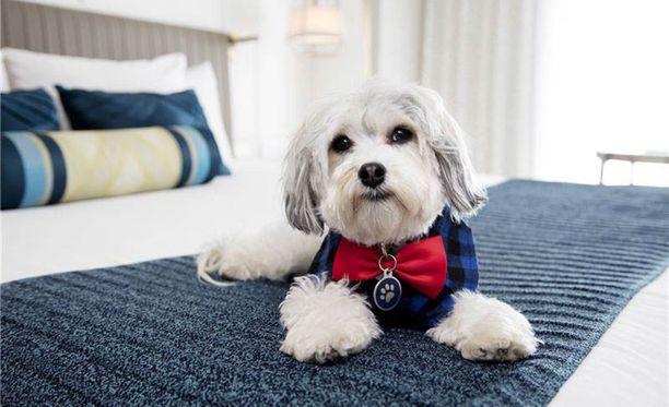 Buster työskentelee hotellissa, jonne lemmikit ovat tervetulleita.