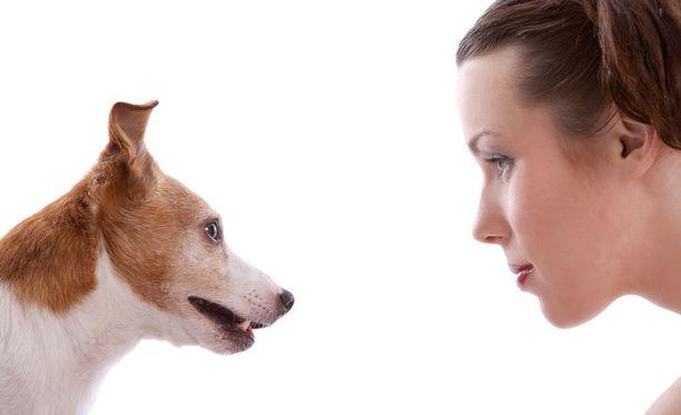 Koiran ilme kertoo sen olotilasta.