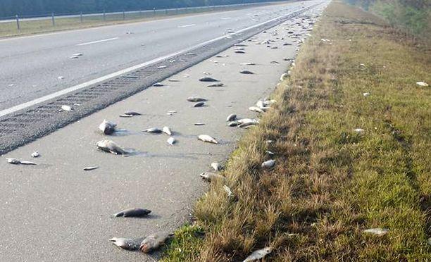 Mätänevien kalojen löyhkä on paikallisten asukkaiden mukaan sietämätön.