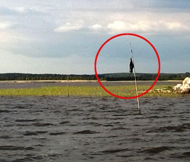 Mies pystytti raatoseipään varjellakseen saaren kupeeseen laskettuja kalaverkkoja.