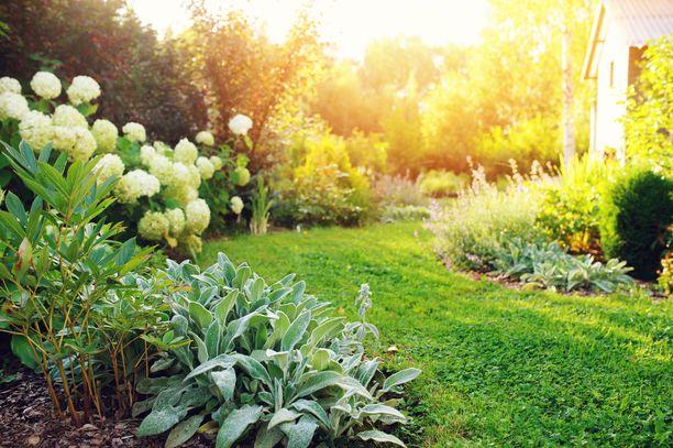 Syksyinen puutarha on vielä vehreä, kunnes jonain aamuna kaikki on valkoisen kuuran peitossa.