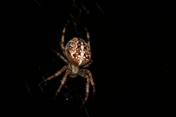 Hämähäkkien pelko rajoittaa elämää monella tavalla.
