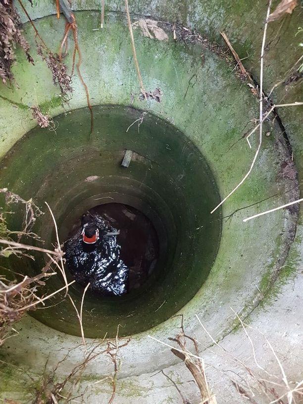 Nasta oli vaarassa hukkua syvään kaivoon.