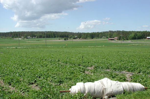 Varsinais-Suomessa ensimmäiset uudet perunat ovat jo myynnissä.