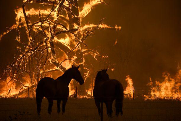Kuuma ja kuiva sää ruokkii paloja Uudessa Etelä-Walesissa. Kuva otettu Blue Mountains -alueelta lauantaina.